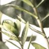 botanischdetail