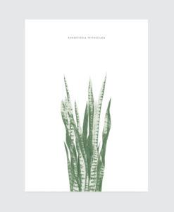 botanical-sanseveria-poster
