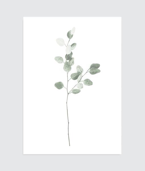 botanische poster minimal