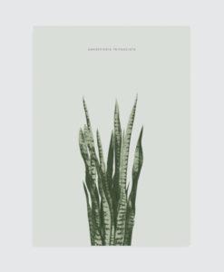 botanical-poster-vtwonen-sanseveria
