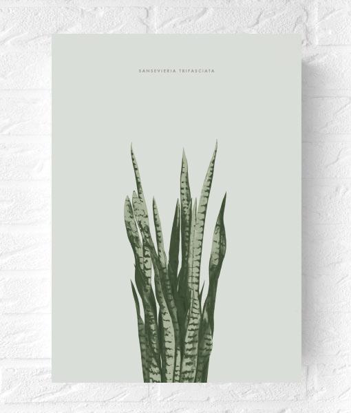 botanische-poster-sanseveria-vtwonen