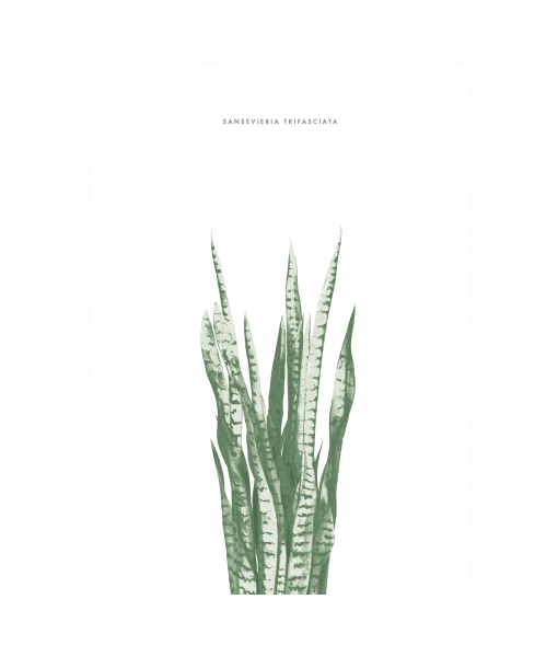 sanseveria-poster-botanical-interieurtrends2016