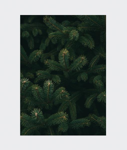 dennenboom detail