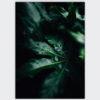 donker blad druppels